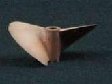 Octura 2 Blade Propeller-1655-0